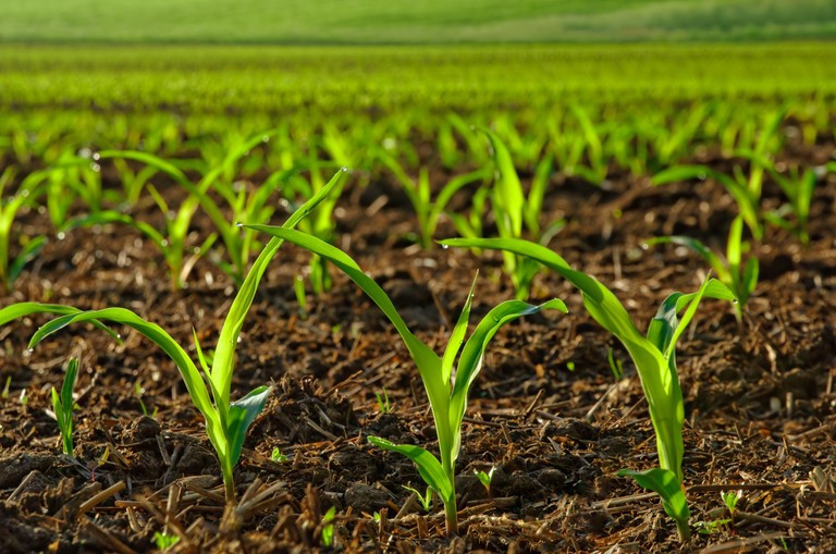 QualiBasic Seed Company – Bridging poor seeds quality gap in Africa to improve productivity